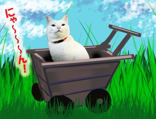 猫侍コスプレ猫