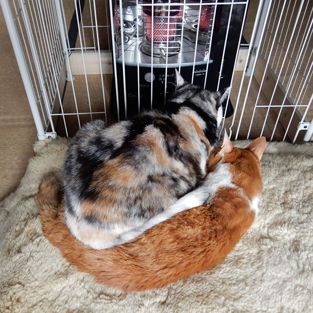 管理人の猫たち