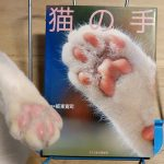板東寛司『猫の手』