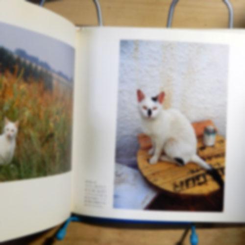 新美敬子『旅猫』