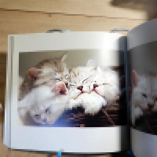 フリーダムK『抱きしめてシャ、シャ、シャ、』