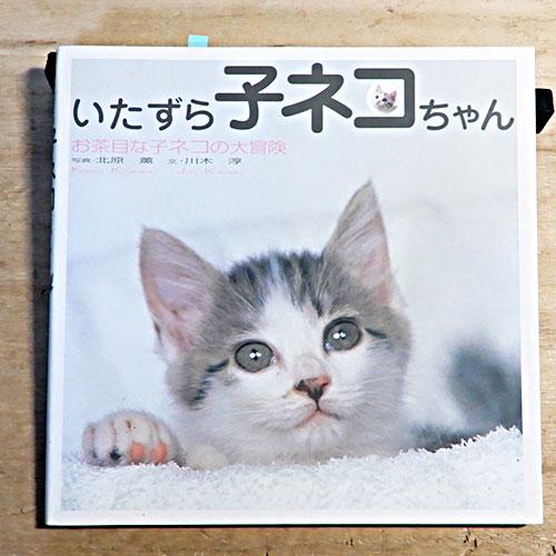 北原薫『いたずら子ネコちゃん』