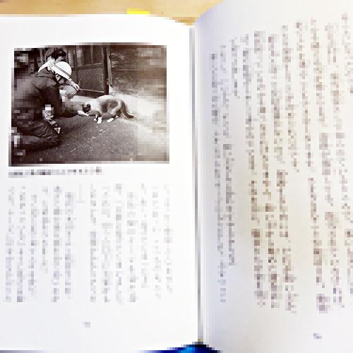 池田まき子『地震の村で待っていた猫のチボとハル』