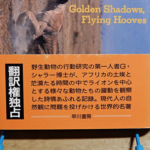 シャラー『ライオン、忍び寄る黄金の影』