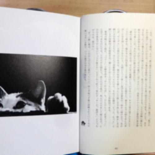 加藤由子『ネコスタシー』