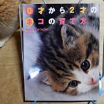 南部美香『0才から2才のネコの育て方』