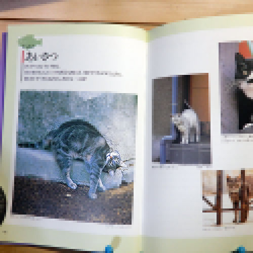 新美敬子『猫の気持ちがみえる本』