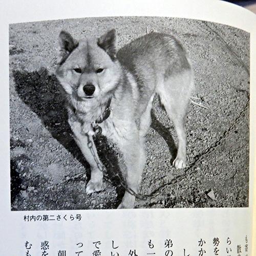 久能靖『川上犬物語』