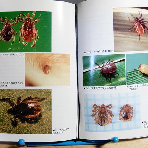 『原色図鑑 野外の毒虫と不快な虫』