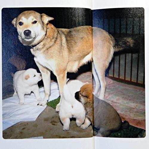 桑原眞二『山古志村のマリと三匹の子犬』
