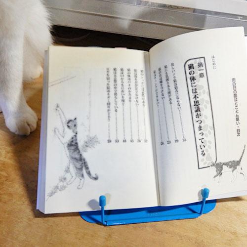 加藤由子『雨の日のネコはとことん眠い』