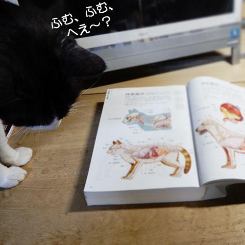 『イヌ+ネコ 家庭動物の医学大百科』
