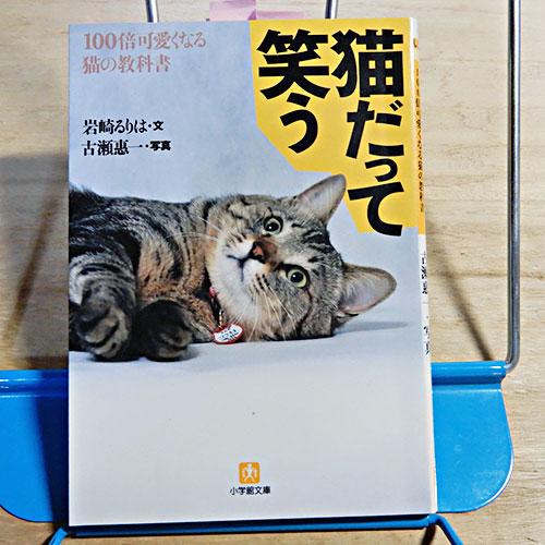 岩崎るりは『猫だって笑う』