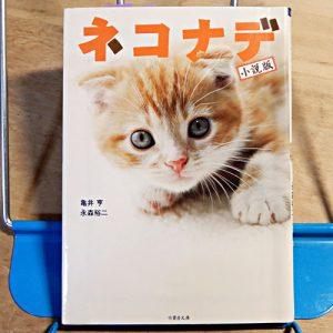 『小説版:ネコナデ』