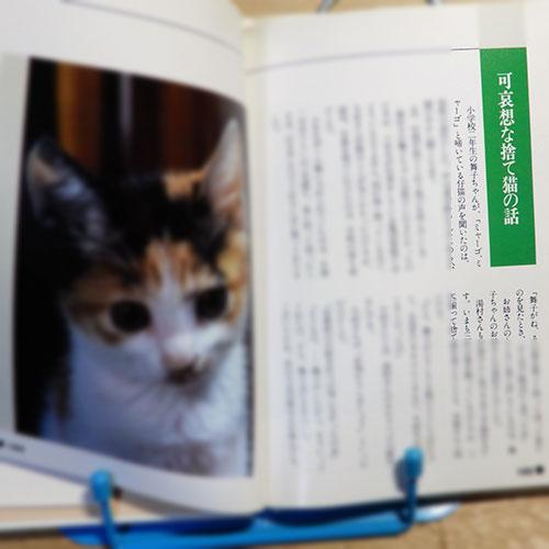 沼田陽一『仔猫が来た夜』