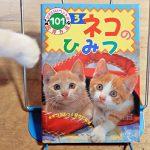 かわいいペットの飼育方法101『ネコのひみつ』