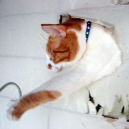 管理人の猫