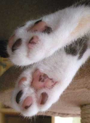 管理人宅の猫