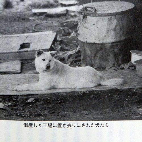 阿部智子『動物たちの3.11』