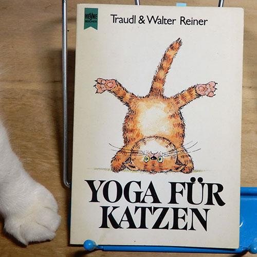 ライナー『猫のためのヨガ』