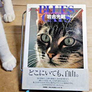 岩合光昭『ブルース・キャット Blues Cats』