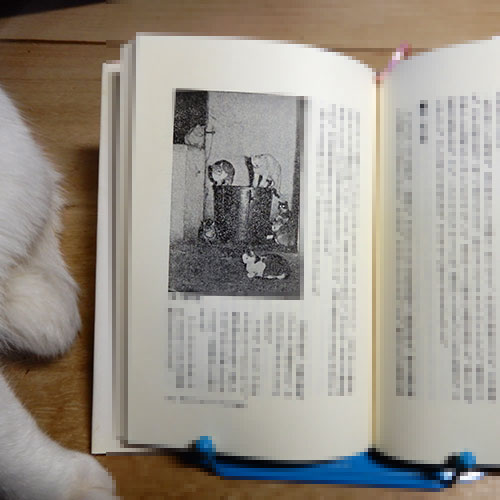 増井光子『動物が好きだから』