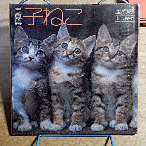 本多信男写真集『子ねこ』『5匹の子ねこ』『猫の家族』