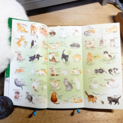 モーリーあざみ野『ナーゴの子猫たち』