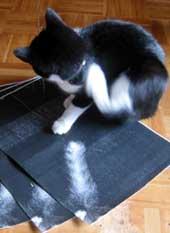 コピーされた猫の尻尾と猫