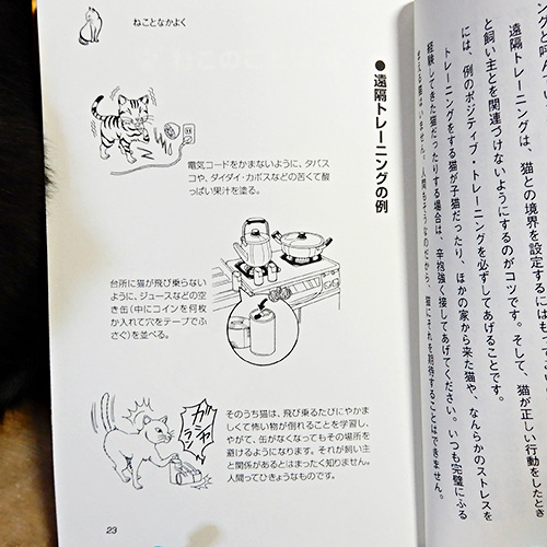 パム先生の『ねこみゅにけーしょん 第1巻 ねこごころ編』