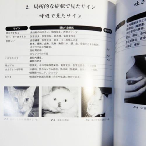 斉藤昭男『ネコのサインを見逃すな』