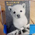 渡辺眞子『捨て犬を救う街』