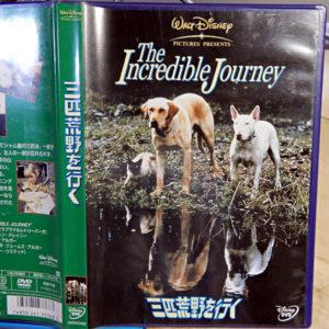 映画『三匹荒野を行く』