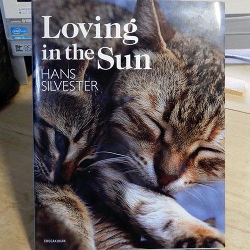 Silvester『Loving in the Sun』
