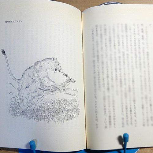 小原嘉明『ライオンはなぜか一頭では狩りをしない』