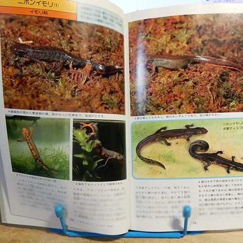 松井孝爾『日本の両生類・爬虫類』