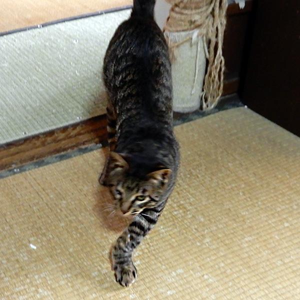 3本足の猫。