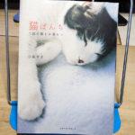 小泉さよ『猫ぱんち 二匹の猫との暮らし』